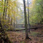 W rezerwacie Krajkowo