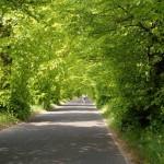 Droga z Wąsowa do Chraplewa