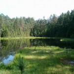 Krzywe. Jezioro Suchary na ścieżce dydaktycznej.