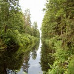 Prosty odcinek kanału augustowskiego – ponad 3 km