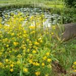Rezerwat Perkuć. Utworzony w 1970 r. w celu zachowania boru iglastego świerkowego – sosnowego