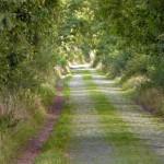 Droga z Maniewa do Objezierza