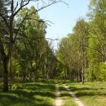 Przez las w kierunku wsi Lewice