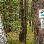 Znakowanie szlaku przy trasie Kórnik – Mosina