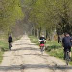 W drodze do Strzępin