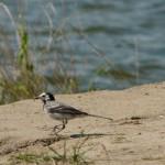 Nad zalewem Żeronice sporo ptaków i wędkarzy. Dobre miejsce na wypoczynek