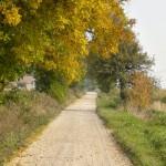 W drodze do Mogilna