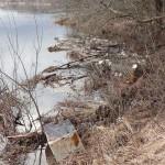 Nad Wartą. Wysoka woda przyniosła mnóstwo śmieci
