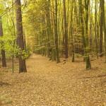 Puszczykowo – bukowy las