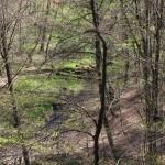 Diabli Skok. Rezerwat 'Diabli Skok' zajmuje 11,62 ha. Chroni rosnący na stromych zboczach wąwozu starodrzew bukowy i mieszany, mchy i wątrobowce oraz liczne źródła, które dają początek Rurzycy