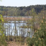 Zalewy Nadarzyckie powstały po spiętrzeniu Piławy groblą, zajmują1500 ha. Są naturalną ostoja bobrów, wydr i licznych gatunków ptactwa wodnego