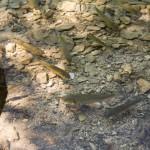 Woda w jeziorach jest krystalicznie czysta i pływa mnóstwo rybek