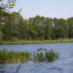 Gwda – zalew w Ptuszy