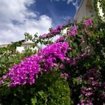 Wiele domów opływa w te piękne kwiaty