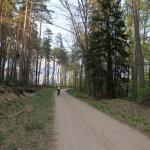 Szybka i równa droga leśna