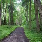 Do Wojdy przez las