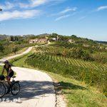 Okolice Motovun – słyną z lokalnego wina Motovunski Teran i Malvazija. Skusiliśmy się na jedno gronko ciemnych winogron z pobliskiej winnicy. Mniam,  było przepyszne