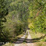 Na tej ładnej drodze łapiemy gumę – kolec akacji