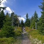 Stromy, kamienisty podjazd