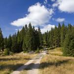 Konna ścieżka. Dolina potoku Wrześnica