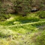 W rezerwacie Torfowiska Doliny Izery