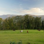 Konie i góry