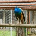 Przy klasztorze mini-zoo