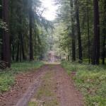 Na szlaku w rezerwacie Św. Rocha