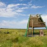 Wieża widokowa na Karsiborskiej Kępie – ostoi ptaków