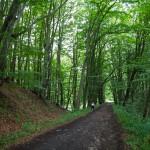 Ścieżka przyrodnicza – przełom rzeki Dębnicy