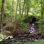 Przełom rzeki Dębnicy