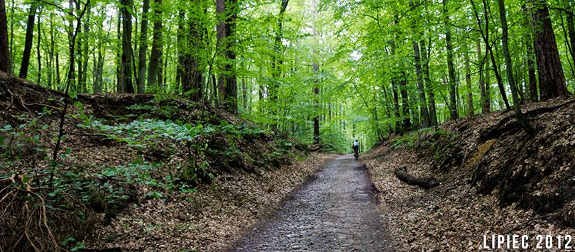 Do Wolińskiego Parku Narodowego