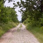 W drodze do Rydzyny