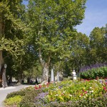 Kwiatowe rondo w parku