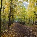 Przez las w Puszczykowie