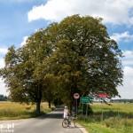 Aleja kasztanowa – pomnik przyrody w Sypniewie, Drzewa posadził w drugiej połowie XIX w. przyrodnik Feliks Sypniewski.