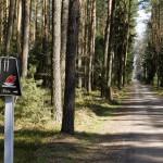 Droga przez las i oznaczenie mogił