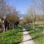 Droga wśród wierzb