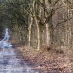 Szlak rowerowy – Pierścień dookoła Poznania