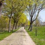 Drzewa zaczynają pokrywać się wiosenną zielenią