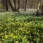 Wiosna zawitała do lasu