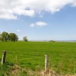 Łąki i pola zachodniej Rugii
