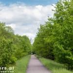 Bujna zieleń wzdłuż szlaku