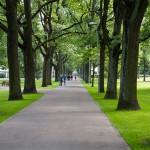 Wśród drzew i krzewów znaleźć można małą architekturę ogrodową, taką jak altanki, ławeczki, ogrodowe pawilony