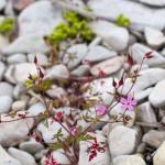 Roślinki przebijają się przez kamieniste podłoże