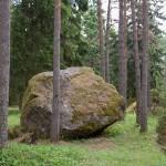 Kamyk w lesie