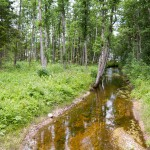 Ponad 40% wyspy pokrywają lasy