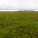 W Parku Narodowym Matasalu – obszar lądowy parku tworzą tereny podmokłe porośnięte trzcinowym sitowiem, nadmorskie łąki i półnaturalne pastwiska powstałe w wyniku wypasania bydła i wykaszania.