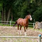 Iwno. Stadnina koni założona w 1916 r specjalizuje się w hodowli koni pełnej krwi angielskiej