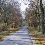 Lokalna spokojna droga, aż miło się śmiga